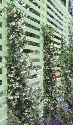 Grimpante n°4 : Le jasmin étoilé (Trachelospermum jasminoïdes) En fleurs tout l'été, ce faux jasmin comble les débutants par sa facilité d'entretien et sa capacité à couvrir les plus petites surfaces verticales comme les treillages les plus hauts. Sa floraison odorante est l'une des plus envoûtantes. Idéal en ville grâce à son feuillage persistant, il pousse aussi bien en pleine terre en rez-de-jardin qu'en pot sur les terrasses d'immeuble. Il préfère les sols frais et se contente d'une…