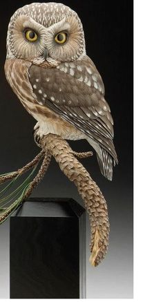 Photography by Bill Bachhuber Wood Owls, Wood Bird, Owl Photos, Owl Pictures, Beautiful Owl, Animals Beautiful, Carved Wooden Birds, Saw Whet Owl, Owl Quilts