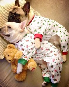 French Bulldogs wearing pajamas