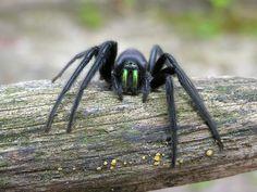 General 1789x1342 spider animals