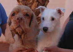 Hunter & Cooper, reunited soul-mates, debuting for adoption today.  Details of their rescue: http://nevadaspca.blogspot.com/2015/03/hunter-cooper.html