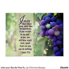John 15:5 I Am the Vine You are the Branches Bible Poster