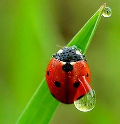 I really like this photo because it would be really difficult to capture. I like how the movement of the water droplet on the ladybug has been photographed. The ladybug is also really clear and the colours are strong. The features are also detailed particularly the smaller water droplets and the ladybug's antennae.