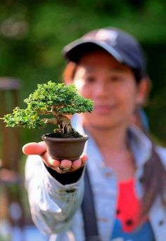 Wonderful small bonsai that appears to be Mame size. Inspire Others, Winter Time, Bonsai, Green, Animal, Beautiful, Animals, Animaux, String Garden
