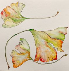 Ginkgo Leaves by mybuttercupart on DeviantArt Botanical Art, Botanical Illustration, Watercolor Illustration, Monet Paintings, Watercolor Paintings, Watercolours, Watercolor Leaves, Watercolor Cards, Leaf Drawing
