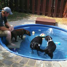 Our fur babies swimming in stock tank pool