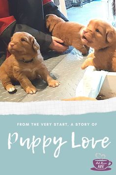 Are you considering adding a puppy to your family? Mama MOE shares her family's experience from the very idea to the arrival and life with their pup.  #puppylove