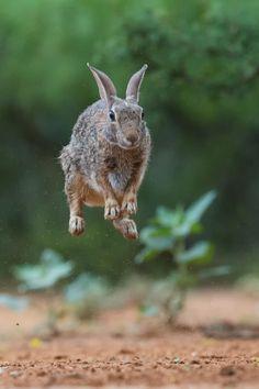 Photograph Bouncing Bunny by Kurt Bowman on 500px