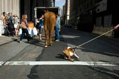 Most agree street photography is candid shots taken in public but nobody said it has to include people! Here's 30 amazing street photographs featuring dogs!