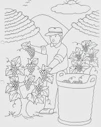 Resultado de imagem para vindimas imagens Coloring Pages, Seasons, Fall, Kids, Vineyard, Easter, Decoration, Autumn Fairy, Fall Preschool