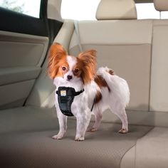 Crash-Tested Dog Car Harness This crash-tested dog car harness keeps you and your pup safe while driving. It has been designed as a dog safety harness, not a converted walking harness. The all-steel N