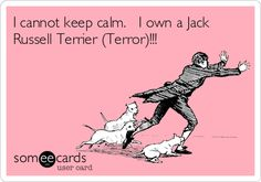 I cannot keep calm. I own a Jack Russell Terrier (Terror)!!!