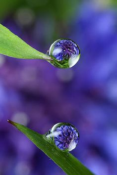 How To Draw Water Droplets Dew Drops Trendy Ideas Dew Drops, Rain Drops, All Nature, Amazing Nature, Amazing Photography, Nature Photography, Foto Macro, Macro Photo, Fotografia Macro