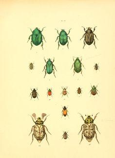 t 1 - Musée entomologique illustré : - Biodiversity Heritage Library