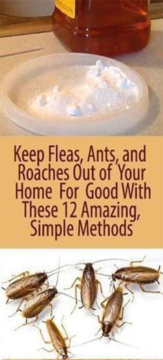 Fleas and ants! Thankfully haven't had to deal with roaches. Keep Fleas, Ants, and Roaches Out of Your Home For Good With These 12 Amazing, Simple Methods - InShapeToday Household Cleaning Tips, House Cleaning Tips, Cleaning Hacks, Household Products, Deep Cleaning, Household Pests, Household Cleaners, Kitchen Cleaning, Hacks Diy