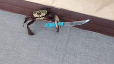 You mess with the crabbo you get the stabbo.