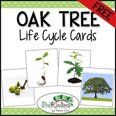 This set teaches the life cycle of an oak tree. These are a great addition to a thematic unit on the Forest or Trees. Great for use in a science center.Preschool, Pre-K, KindergartenScience