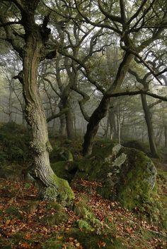 Padley Gorge, Peak District, England byjohnc9393