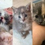 Why you should think twice before you adopt a kitten - 7 in 10 cats and kittens that end up in animal control die. Think about that commitment before you bring home a pet.