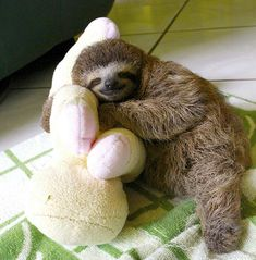 ...In a perfect world, I am that stuffed animal.