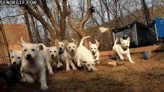 Cute Puppy Horde
