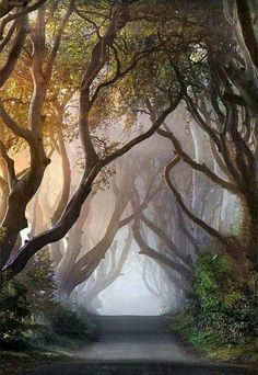 Mysterious tree-covered road
