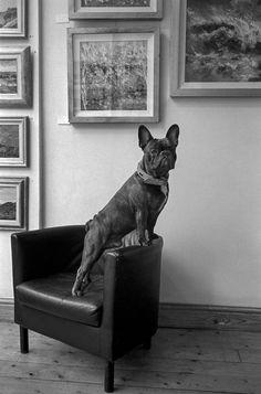 Photo ©Richard Alton / French Bulldog posing in a London art gallery