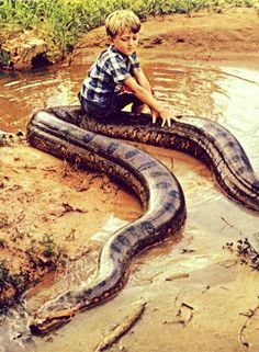 58 Best Large monster snakes images in 2015 | Snakes