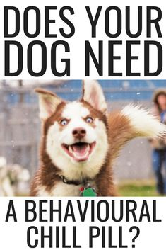 Brain Training For Dogs - Adrienne Farricelli's Online Dog Trainer Dog Training Camp, Puppy Training Guide, Puppy Training Schedule, Basic Dog Training, Agressive Dog Training, Indoor Dog Park, Hyper Dog, Dog Nutrition, Easiest Dogs To Train