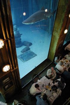 Restaurant Shark Aquarium