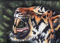 ACEO Original Art Animal Tiger Stripes Wild Miniature Illustration SMcNeill #Realism