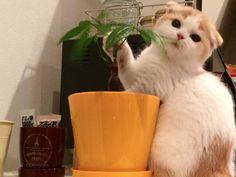 Kitty, Pets, Little Kitty, Kitty Cats, Kitten, Cats, Animals And Pets