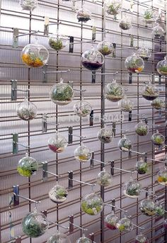 A wall of hanging glass terrariums with colored moss and airplants! Air Plant Display, Plant Decor, Popsicle Stick Crafts, Craft Stick Crafts, Cactus Flower, Flower Art, Colored Sand, Glass Terrarium, Cactus Terrarium