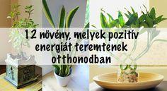 Garden, Plants, Decor, Garten, Decoration, Lawn And Garden, Gardens, Plant, Decorating