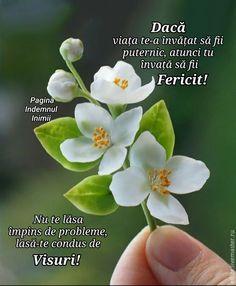 Motto, Plants, Facebook, Plant, Mottos, Planets