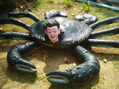 Oh no! crab boy is coming!
