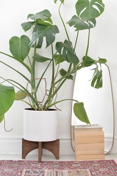 beautiful house plant stand. DIY mid century plant stand 20 Plant Stand Ideas That Make Your More Beautiful