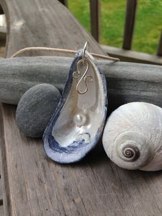 Image result for maine shells