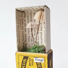 Tiny mushroom in a matchbox by paper artist Kate Kato