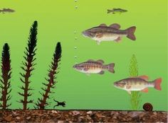Holistic vs Specific Thinking - One person sees a fish while the other sees an aquarium