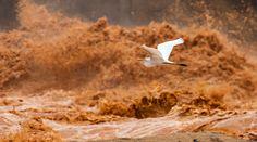 impacto da tragédia sobre o Rio Doce