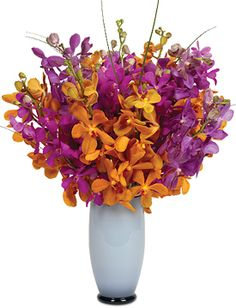 NEW! Captiva Orchids - starting at $59.95