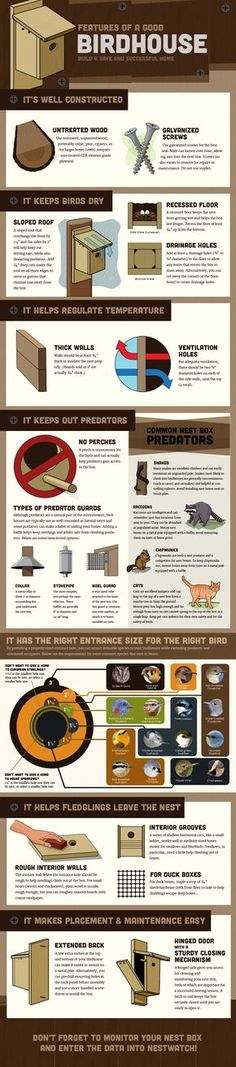 All about birdhouses