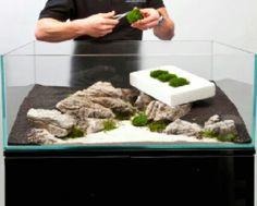 A thoroughly modern aquascape - Practical Fishkeeping Aquarium Setup, Nano Aquarium, Home Aquarium, Nature Aquarium, Aquarium Design, Aquarium Fish Tank, Aquarium Aquascape, Discus Aquarium, Fish Aquariums