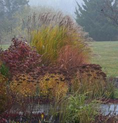 Beautiful grasses in