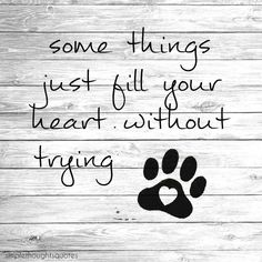 simpel thoughts quote Some things just fill your heart without even trying. Gek hoe snel dat ook kan gaan met een lief hondje :)