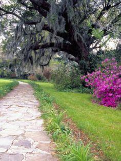 Pathway in Magnolia Plantation and Gardens, Charleston, South Carolina, USA