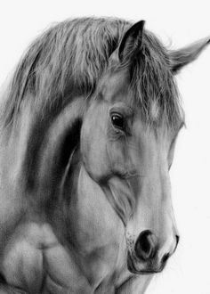 Recommendations for Those Who Want to Draw Charcoal - Horse Pencil Drawing, Horse Drawings, Pencil Art Drawings, Animal Drawings, Drawing Art, Animal Sketches, Art Sketches, Horse Sketch, Horse Artwork