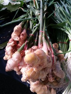 #ginger straight out of the ground