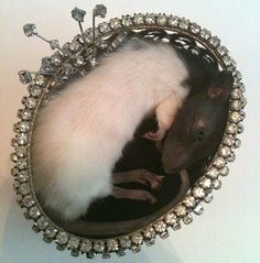 Taxidermy Resting Rat In Ornate Chest by PreciousCreature on Etsy, $145.00